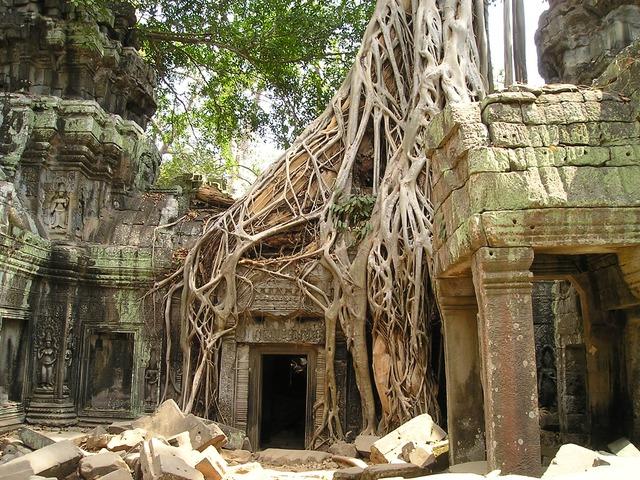kořeny stromu na domě